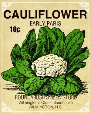 Cauliflower Seed Packet   A Digital Scrapbooking Ephemera Embellishment By  Marisa Lerin