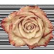 Vintage - November Blogtrain Rose