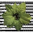 It's Christmas - Green Poinsettia
