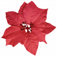 It's Christmas - Red Poinsettia
