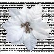 It's Christmas - White Poinsettia
