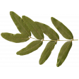 Sweet Valentine - Leafy Branch