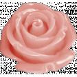 Sweet Valentine - Pink Rose Button