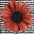 Sweet Valentine - Red Flower