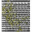 Oh Lucky Day - Green Glitter Splatter