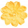 Sunshine And Lemons - Yellow Flower