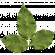 Rain, Rain - Leafy Branch