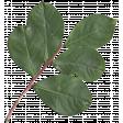 I Love You Mom - Leafy Branch