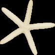 At The Beach - White Starfish