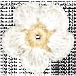 Oh Baby, Baby - White Doily Flower