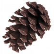Christmas In July - CB - Pine Cone Element