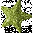 Summer Daydreams - Star - Green