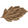 Outdoor Adventures - Leaf Brown