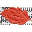 Outdoor Adventures - Leaf Red Orange