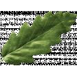 Outdoor Adventures - Little Leaf - Green