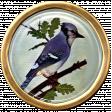 Ephemera Bird Brad 01