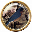Ephemera Bird Brad 02