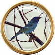Ephemera Bird Brad 06