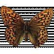 Khaki Scouts Butterfly