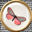 Butterfly Brad 3