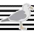 Coastal Sea Gull