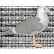 Coastal Sea Gull Felt