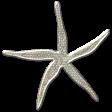 Coastal Starfish - Metal