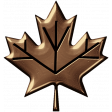 Bronze Leaf 02
