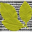 Garden Party Mini Kit - Leaves