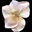 Garden Party Silk Flower - White & Coral