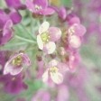 Garden Party Texture Paper - Flowers