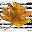 Autumn Pieces - Leaf 07