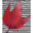 Autumn Pieces - Leaf 08