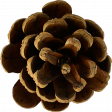 Autumn Pieces - Pinecone