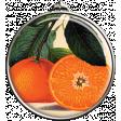 Oranges Pendant