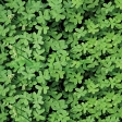Clover Photo Paper