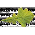 Many Thanks - Leaf
