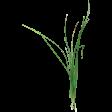 Summer Fields - Grass