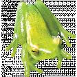 Pond Life - Real Frog