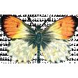 Garden Party - Orange Butterfly 2