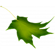 Crisp Fall Air Leaf 04