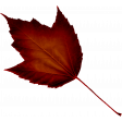 Crisp Fall Air Leaf 05