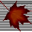 Crisp Fall Air Leaf 06