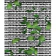 Crisp Fall Air Leaves Green