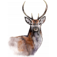 PS Blog Train Jenuary 2021 -  Deer