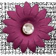 ::Daisy Clementine:: Flower 01