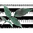 Vivian Margo: Leaves 02