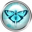 Aqua Navy Blue Brad Butterfly