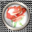 Orange Rose Brad
