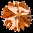 Autumn Flower 07